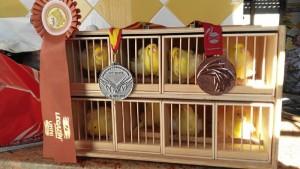 El canaricultor espera seguir cosechando importantes premios en próximas competiciones.