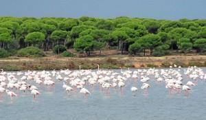 El 22 de marzo se celebra el Día Mundial del Agua. En la imagen, el Paraje Natural Marismas del Odiel, declarado Reserva de la Biosfera.