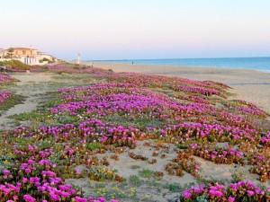 Foto de la playa de Punta Umbría tomada durante las vacaciones de Semana Santa.