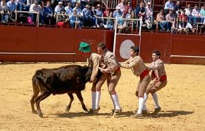 Los asistentes han disfrutado de los forcados portugueses de Amaralella.
