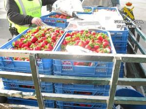 Se han incautado 9000 kilos de frutos del campo.