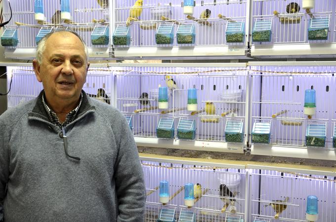 El ayamontino Manolo Cordero se proclama campeón del mundo de canario hosso japonés