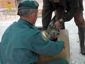 Operación para combatir el tráfico de especies silvestres.