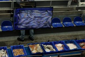 La Lonja de Isla Cristina está completamente informatizada. / Foto: L.Cebrino.