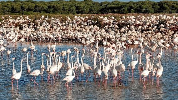 Las Marismas del Odiel, historia viva de Huelva