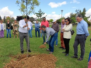 Comienza la plantación de árboles en la capital onubense.