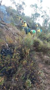 Efectivos del Infoca trabajan en la extinción del incendio.