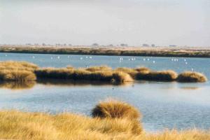 Una bella imagen de Doñana.