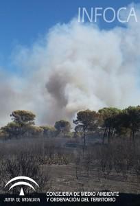 Incendio declarado en Gibraleón.