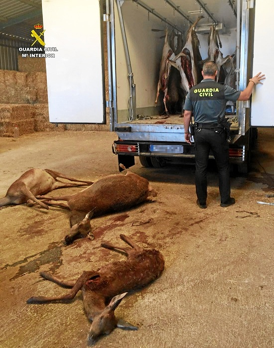 Intervenidos 15 ciervos cazados ilegalmente de Alájar.