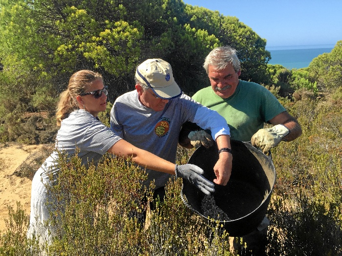 Voluntarios trabajando en la recogida de semillas.