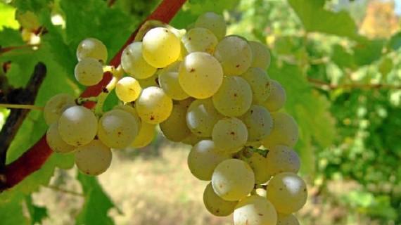 Un vino blanco de la D.O. Condado de Huelva está presente en la guía de 'Los Supervinos' 2018