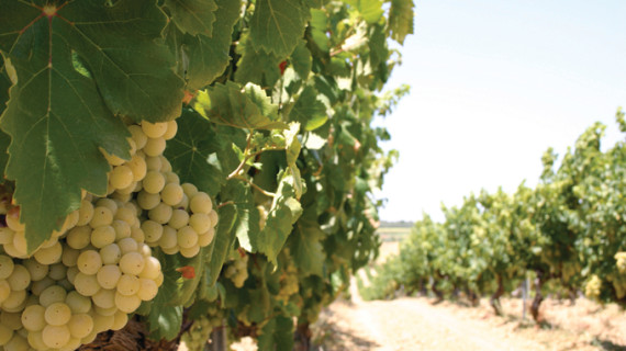 Destacan la internacionalización como clave de futuro para el sector vinícola