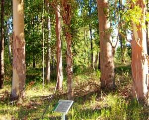Arboreto del Villar, un lugar único en Europa. / Foto: Junta de Andalucía.