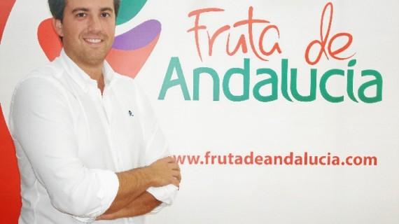 'Fruta de Andalucía', una comercializadora de berries onubense que se afianza en los mercados y apuesta por reforzar su presencia en Huelva