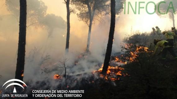 Licitado el tercer lote de obras forestales en montes públicos por 5,92 millones de euros