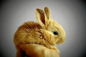 Los animales que adoptamos como mascotas son cada vez más diversos. / Foto: Pixabay.