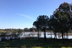 Podemos recorrer los senderos de Doñana, de gran belleza. / Foto: Junta de Andalucía.