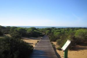 Lejos de lo que suele pensarse, en la zona de playa y en el Condado se puede disfrutar de magníficos senderos. / Foto: Junta de Andalucía.