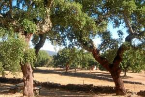 La Sierra de Aracena y Picos de Aroche cuenta con 25 senderos señalizados. / Foto: Junta de Andalucía.
