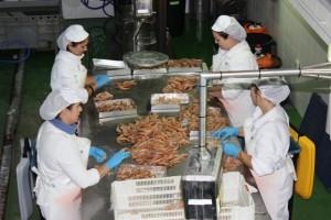 Operarias de 'tablero' de Distribumar con el marisco.