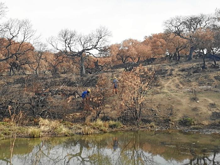 Medio Ambiente autoriza aperturas de zonas en el entorno del incendio de La Granada