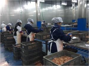 Imagen de manipulación en las instalaciones del Grupo Peix.