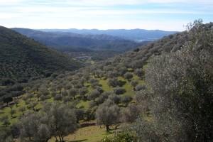 Al llegar al Mirador del Alto del Bujo puede verse el valle de la Ribera de Montemayor. / Foto: Junta de Andalucía.