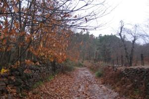 Desde Aracena podemos tomar tres senderos, como éste que nos lleva a Fuenteheridos. / Foto: Junta de Andalucía.