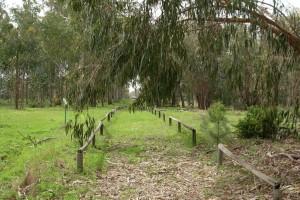 El 'Arboreto del Villar' recorre una zona botánica dedicada al eucalipto. / Foto: Junta de Andalucía.
