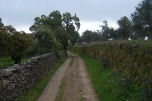 Una imagen del camino entre las Cumbres. / Foto: Junta de Andalucía.