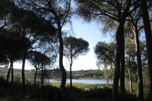 Sendero 'Dehesa del Estero'. / Foto: Junta de Andalucía.