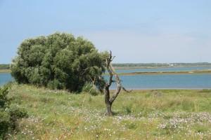 'El Almendral', en la zona de la Isla Saltés.  / Foto: Junta de Andalucía.