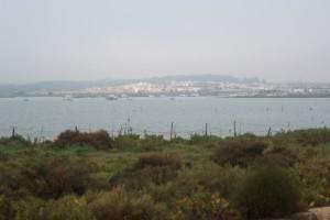Un sendero nos permite adentrarnos en las Marismas de El Rompido. / Foto: Junta de Andalucía.