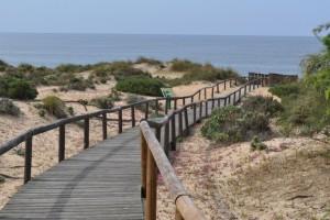 En los Enebrales, Punta Umbría, tenemos seis senderos que discurren por un bello paisaje hasta la playa. / Foto: Junta de Andalucía.