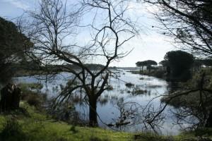 Una bella imagen de la Laguna del Acebuche. / Foto: Junta de Andalucía.