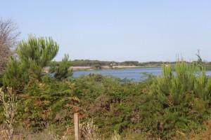 Sendero de La Laguna de las Madres. / Foto: Junta de Andalucía.