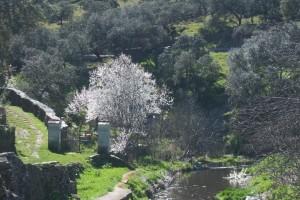 Una bella imagen de la Sierra de los Gabrieles. / Foto: Junta de Andalucía.