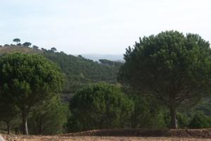 Sendero de Sierra Pelada, en Aroche. / Foto: Junta de Andalucía.