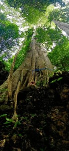 Un país rico en árboles milenarios.