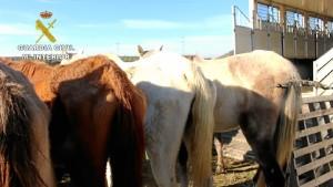 Los caballos no presentaban la atención alimenticia necesaria ni la asistencia veterinaria precisa.
