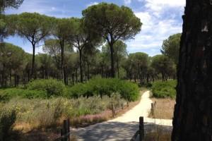 Un recorrido por el corazón de Doñana.