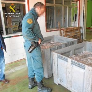 El pulpo fue entregado al Banco de Alimentos para ser distribuido en comedores sociales.