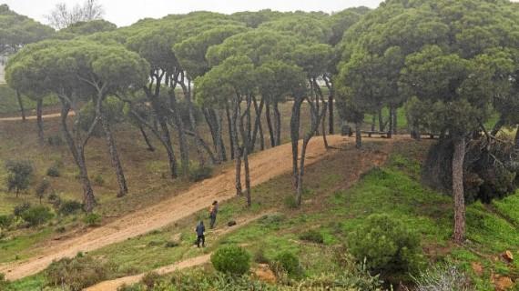 Denuncian la tala de once árboles en el Parque Moret
