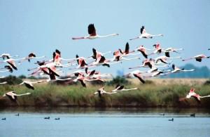 El liderazgo de las empresas de AIQBE en Huelva ha de comportar necesariamente un compromiso medioambiental.