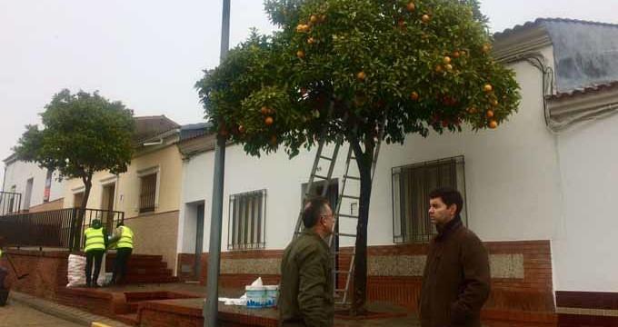 Valverde del Camino recoge unos 100.000 kilos de naranjas de sus calles