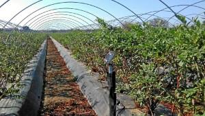 Agricultores y técnicos del Condado se forman para aumentar el riego eficiente en los frutos rojos.