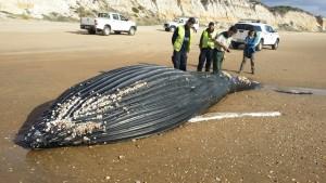 Imagen de la ballena.