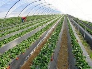 Agricultura ha pasado de 34.100 a 33.300 ocupados.