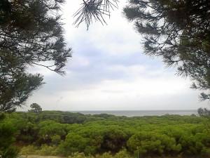 Este carril entre La Bota y El Portil nos invita a disfrutar de un precioso paisaje natural. / Foto: Junta de Andalucía.
